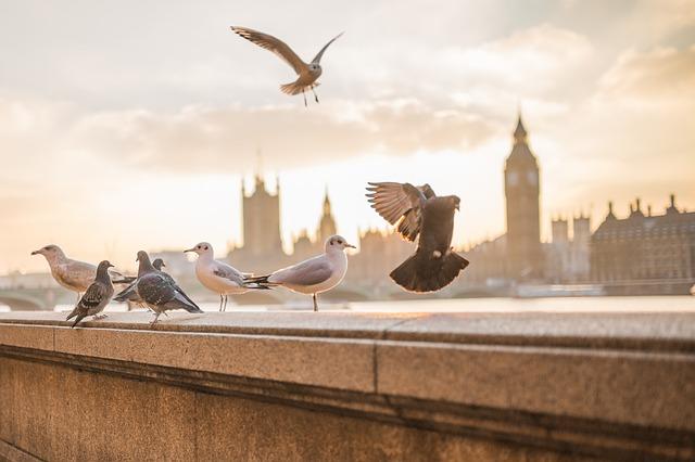Uccelli in città